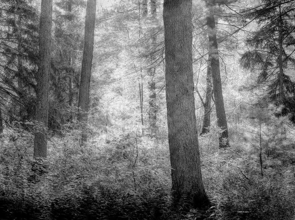 Photograph of forest at noon.