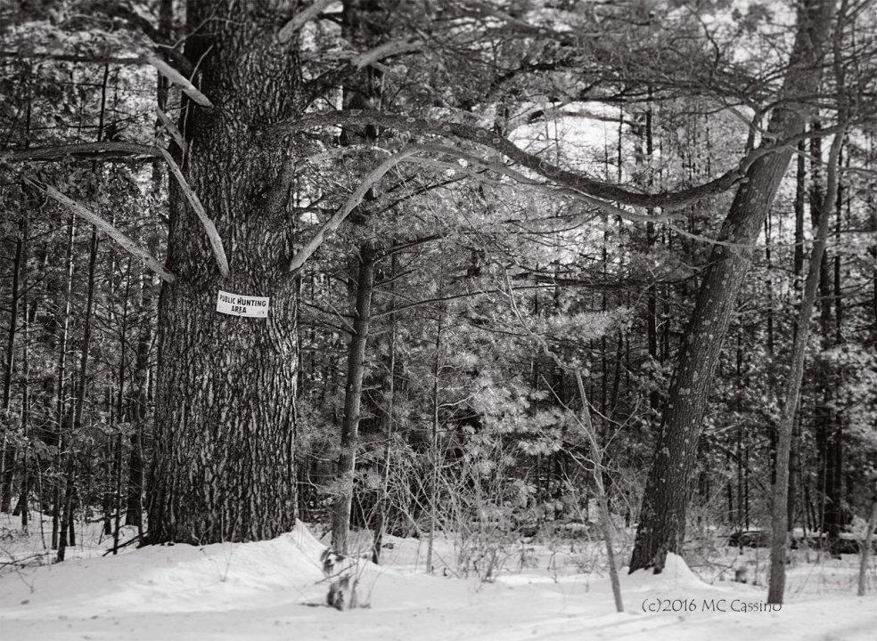Public Hunting Area
