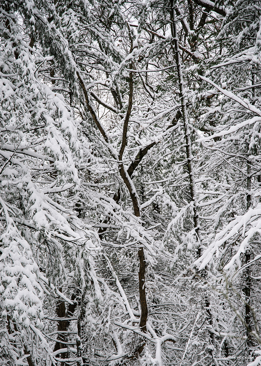 Snowy Branch Abstract