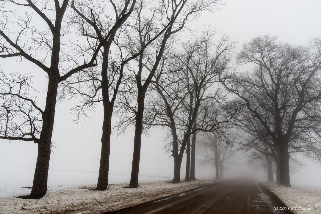 Foggy  Back Roads
