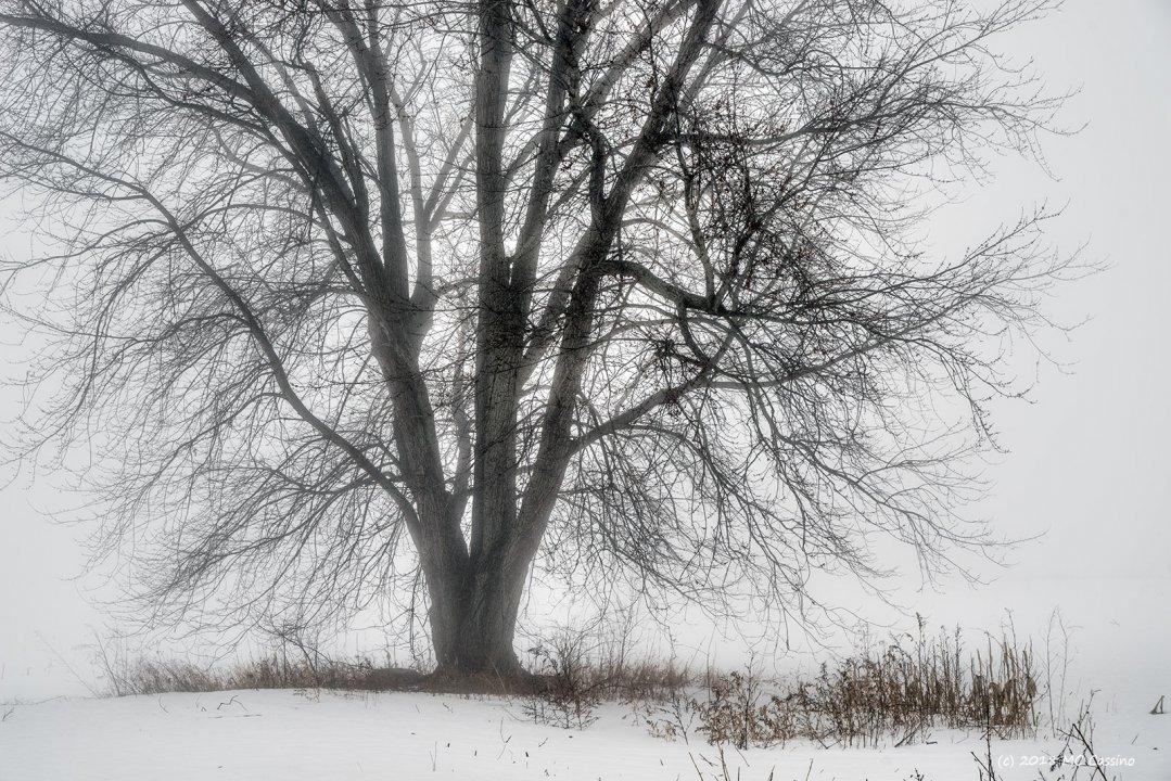 Foggy Tree II (Color Version)
