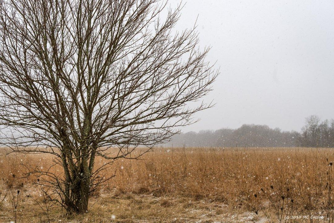 Snow Falls on the Prairie