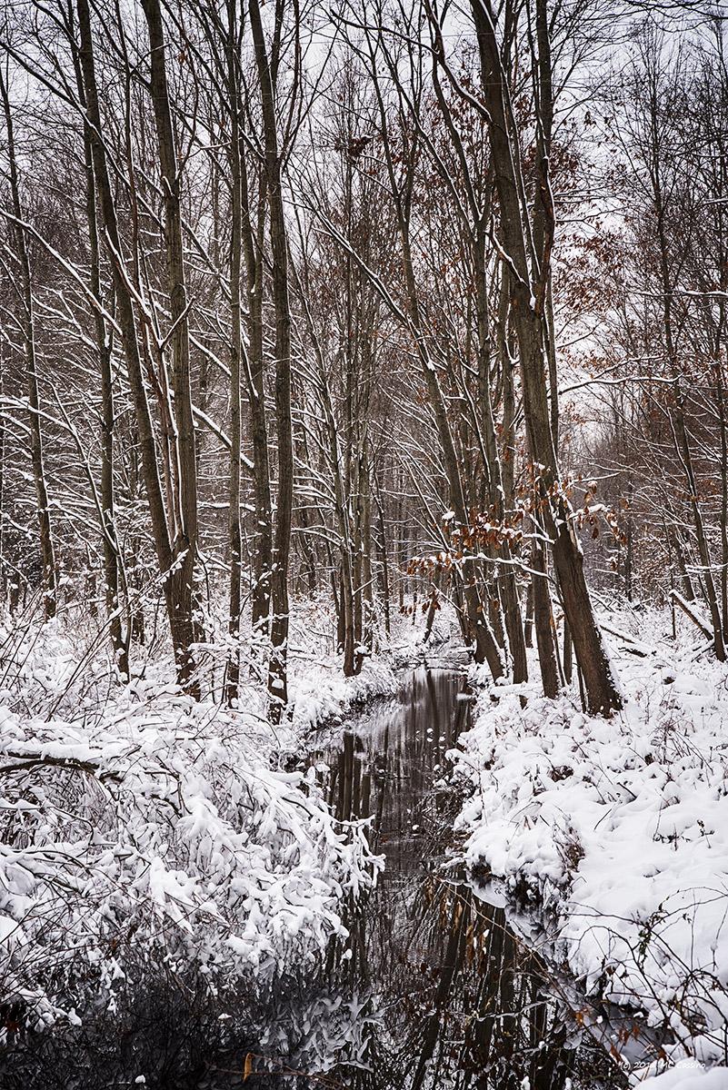 Creek In Snowy Woods