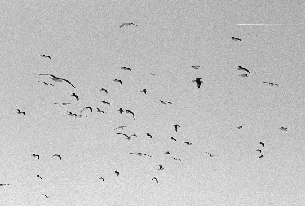 49 Gulls, 1 Jet