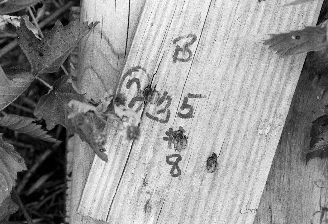 B (2) 35 #8