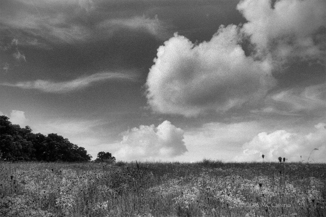 Late Summer on the Prairie
