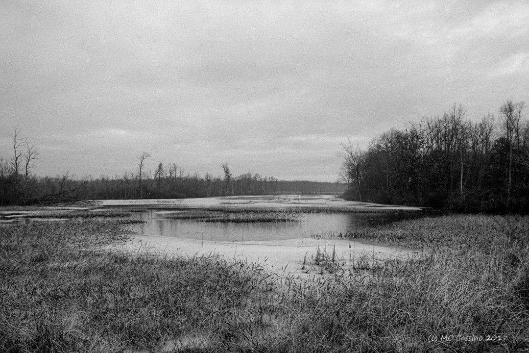 Midwinter Marsh