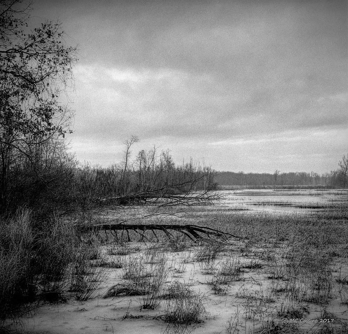 January Marsh