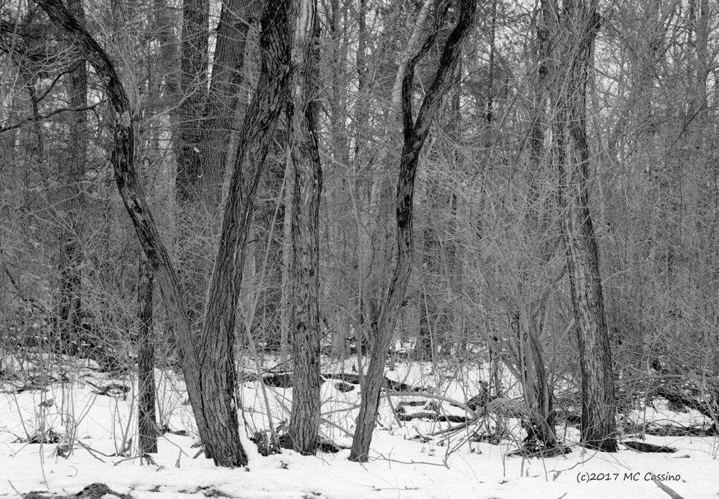 Winter Brambles