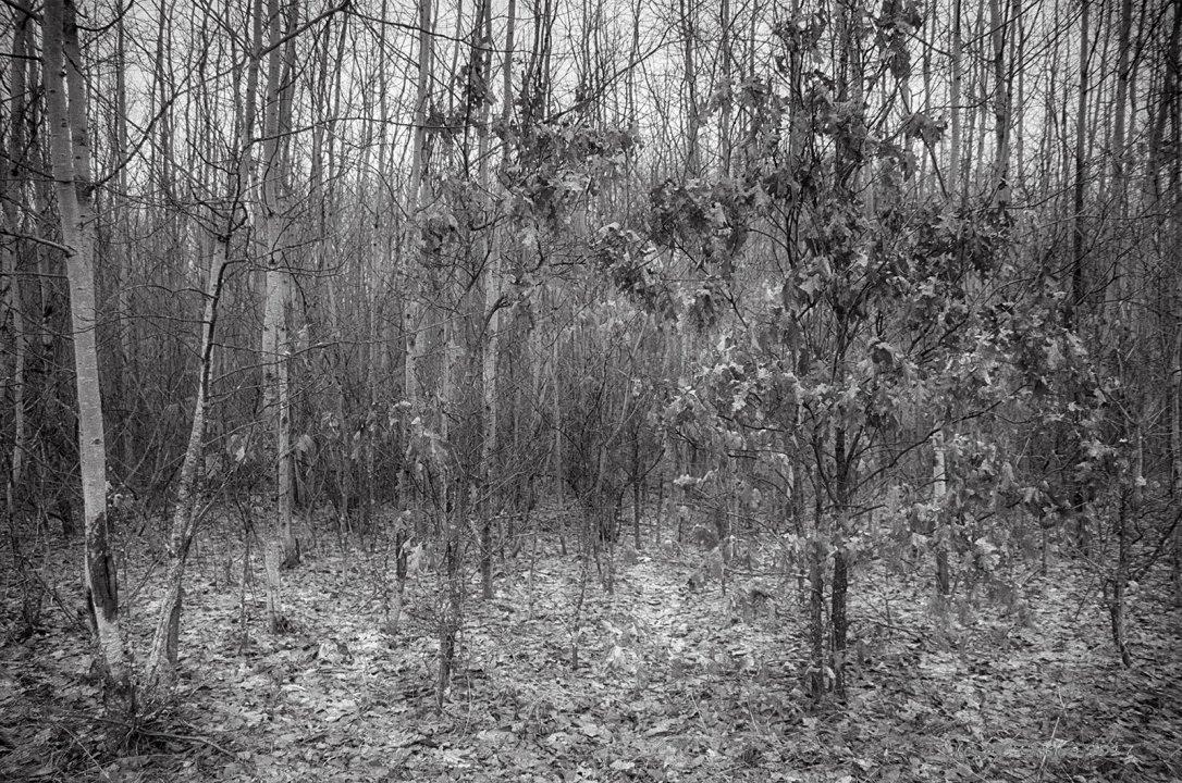 Scrubby Woods