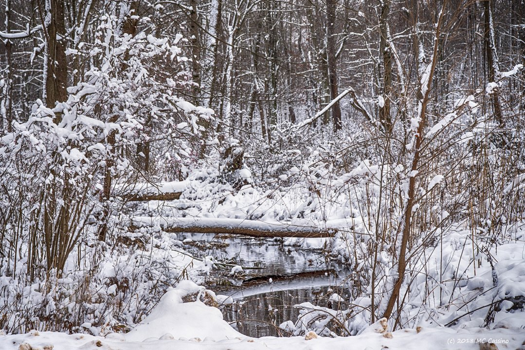 Creek in Snowy Woods II