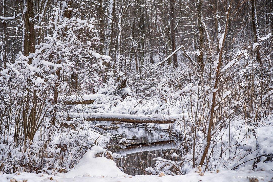 Creek in Snowy Woods II