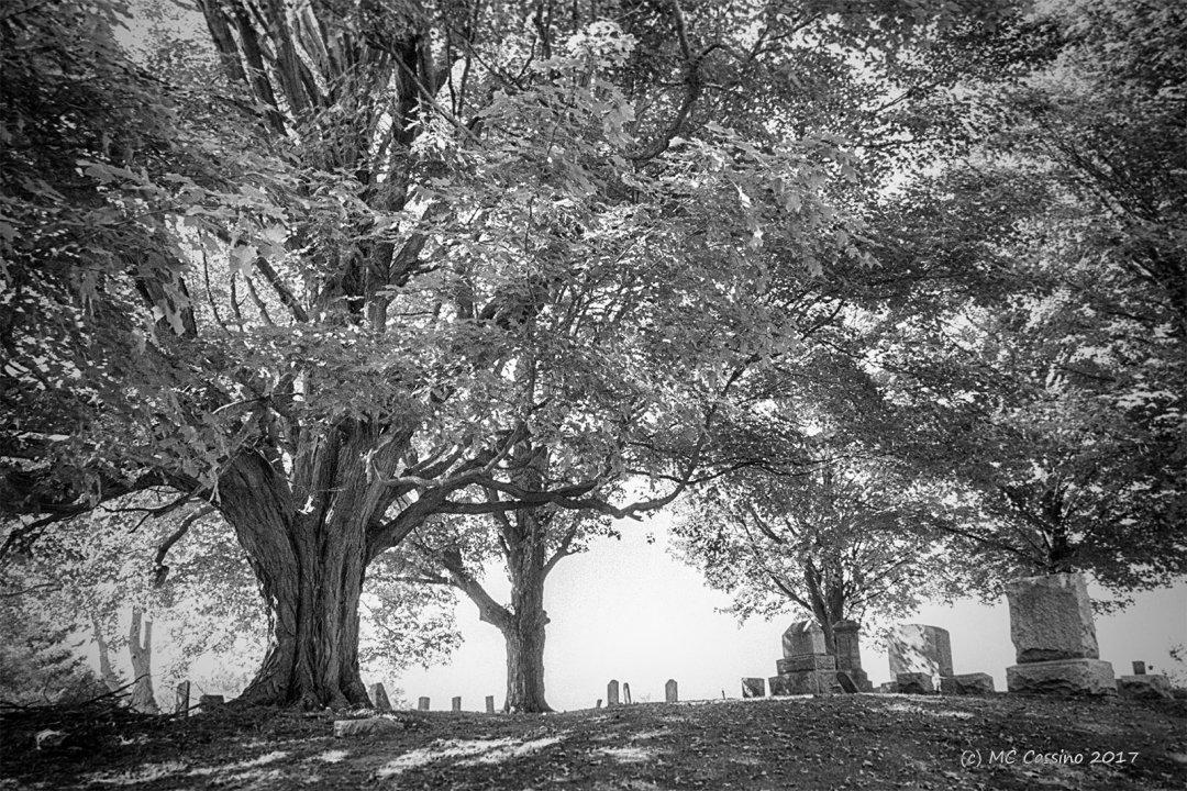 Summer Cemetery II