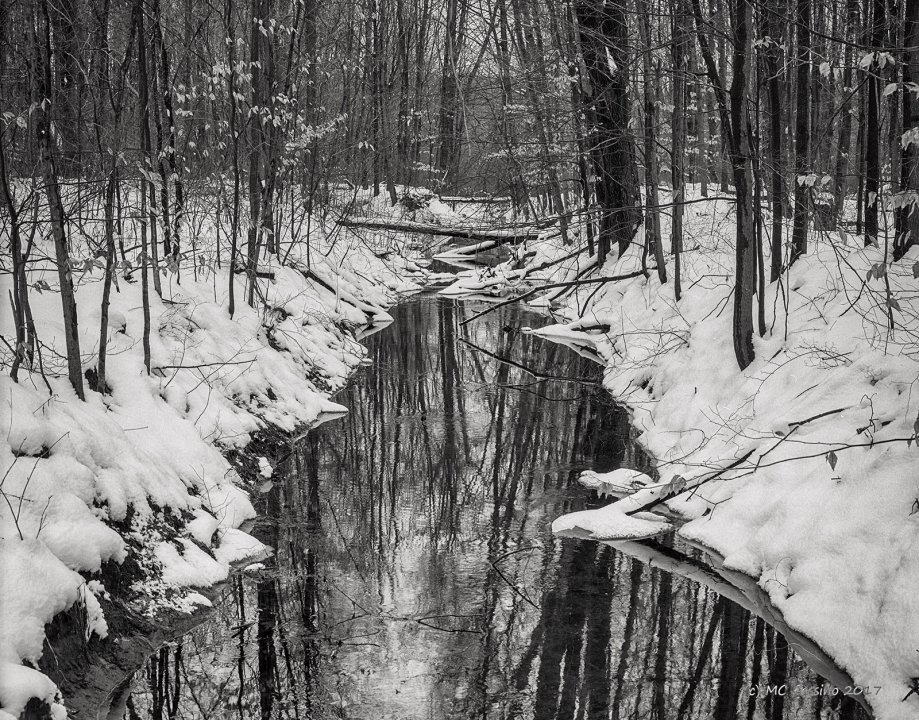 Ditch in Snowy Woods