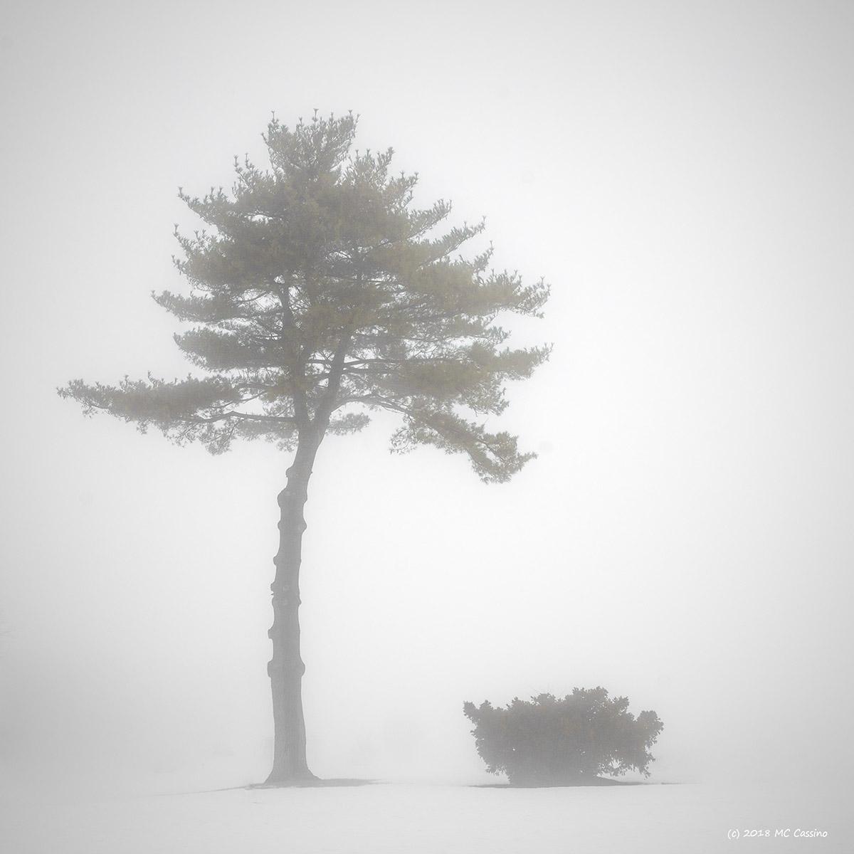 Tree and Shrub