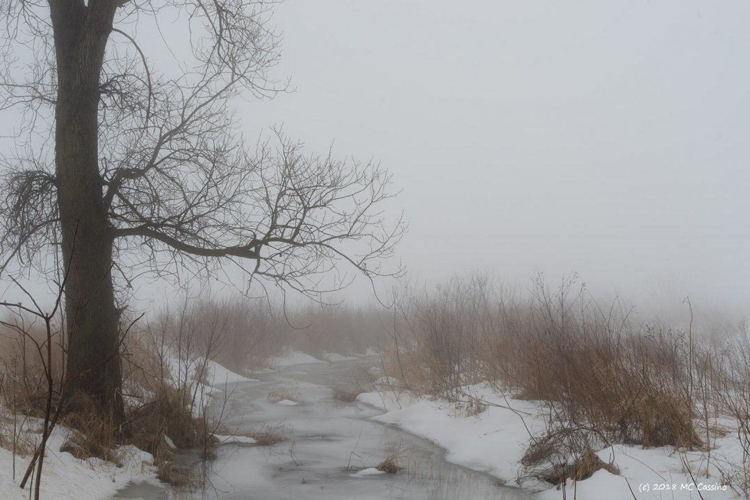 Foggy Ditch