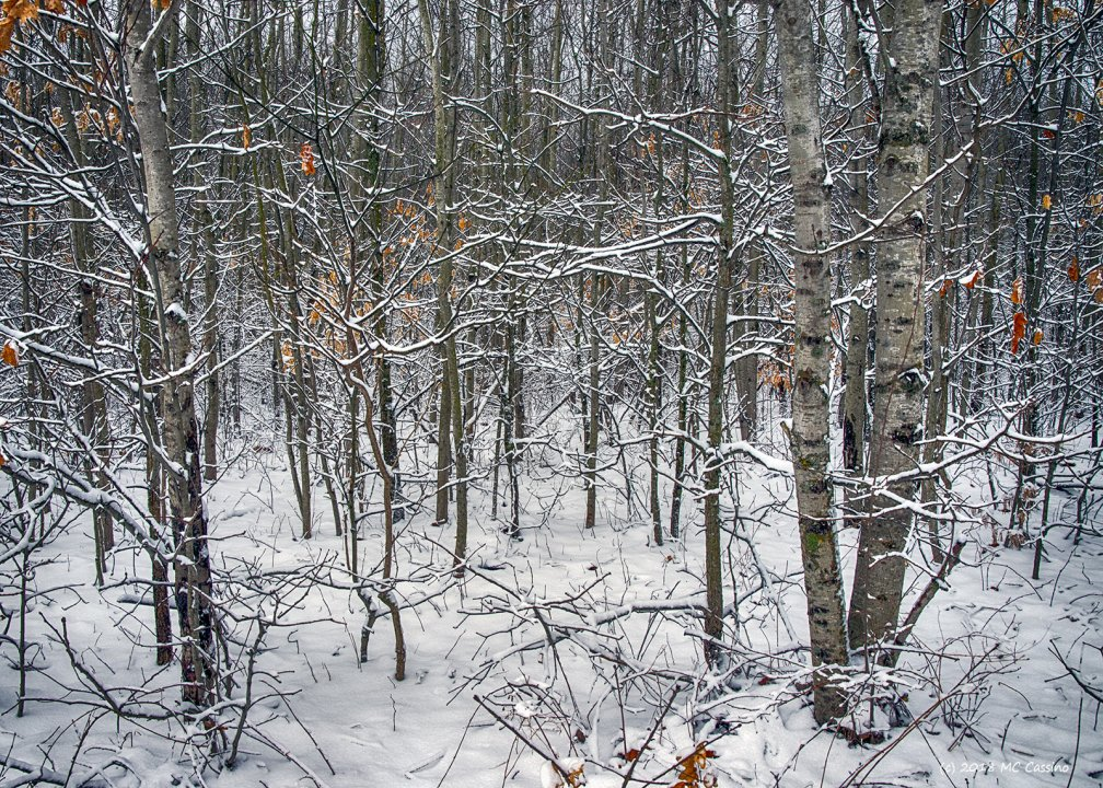Spring Snow VI