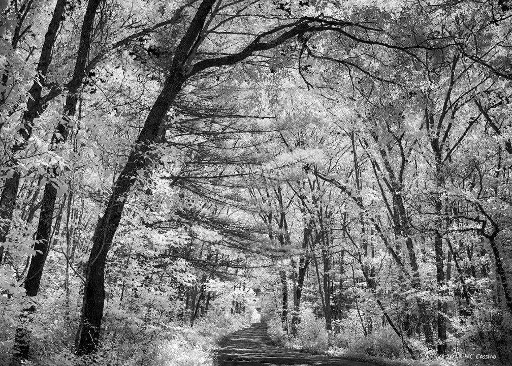 Near Pine Point Campground