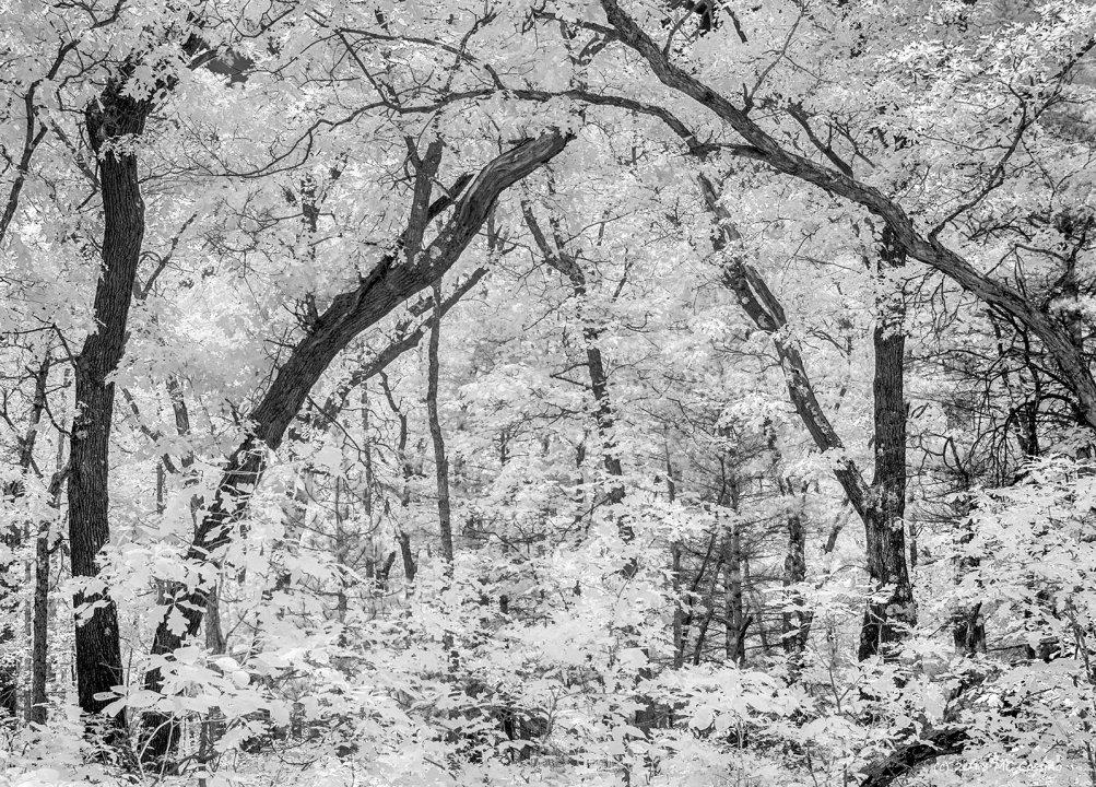 Luminous Woods