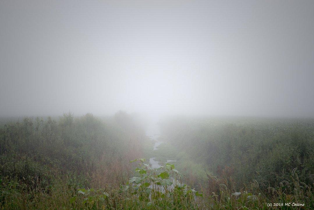 Foggy Ditch