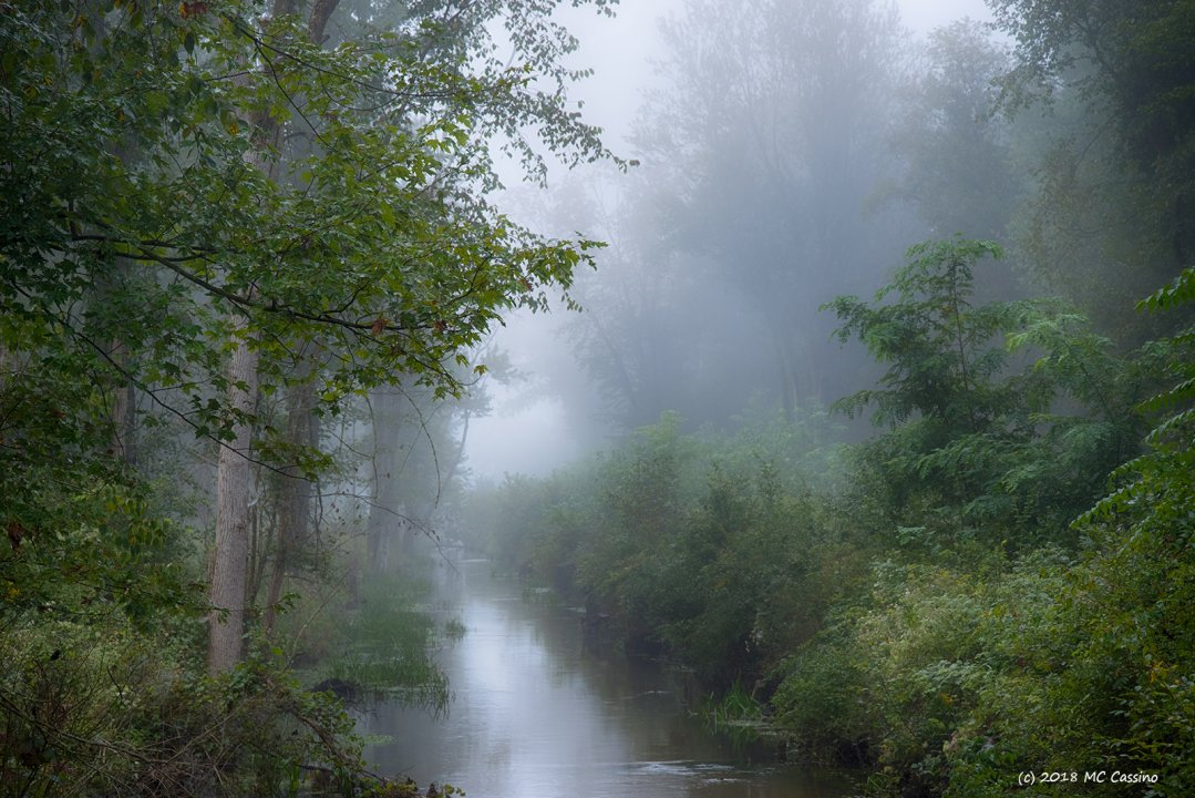 Misty Creek