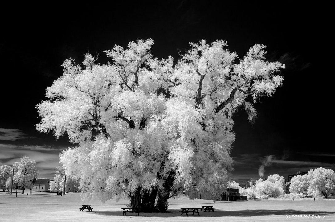 Tree in Lincoln Park, Harbor Beach, Michigan