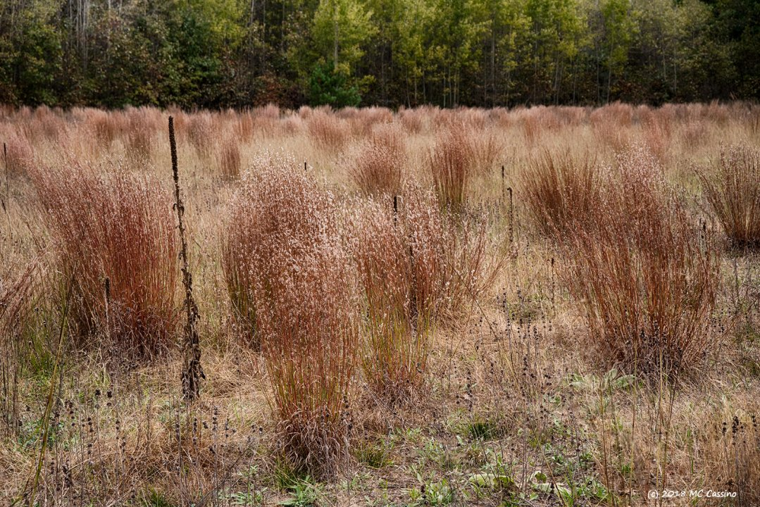 October In The Barrens