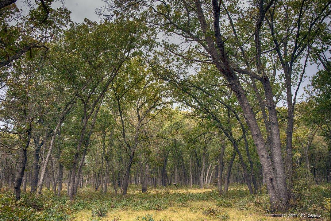 Autumn on the Oak Savanna