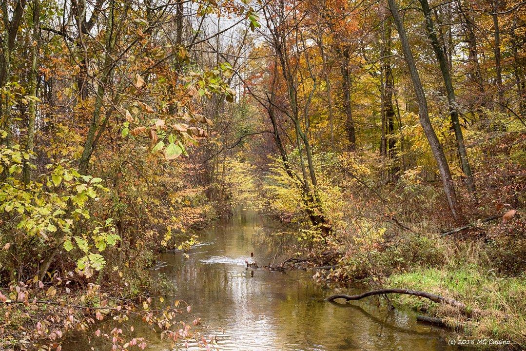Autumn Creek II