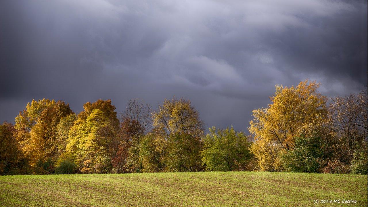 Sweet Autumn Light