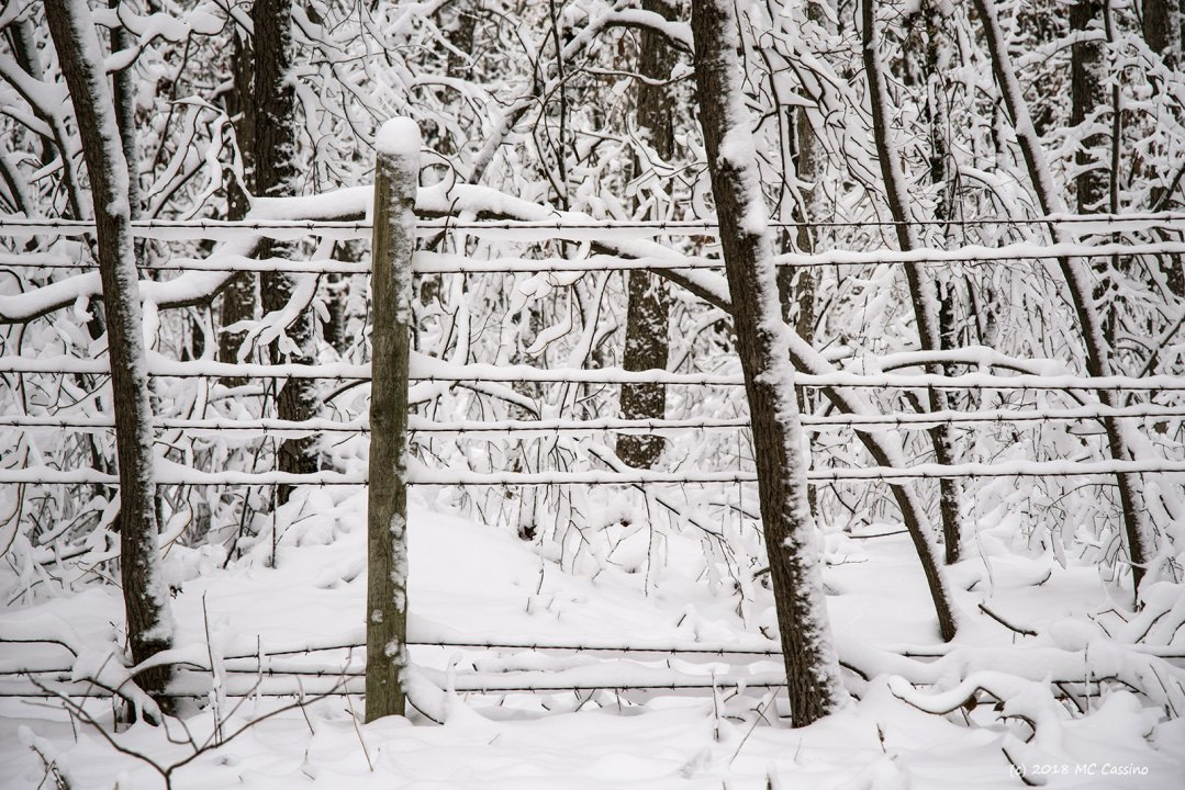 Barbed Wire In The Snow