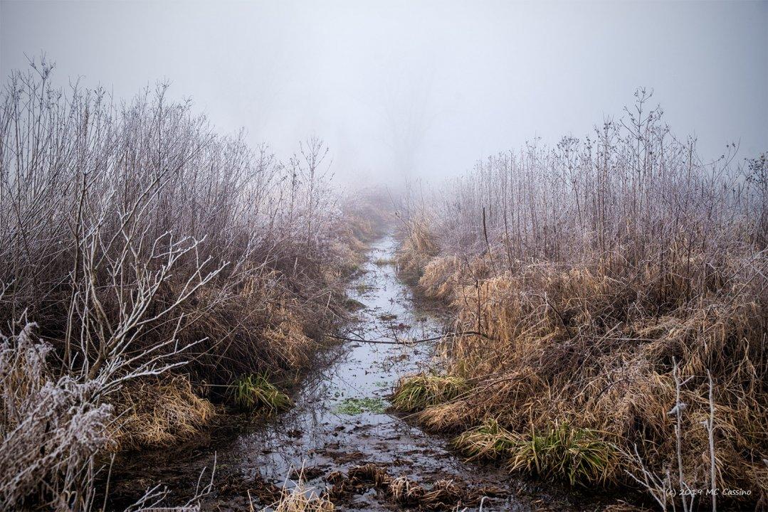Frosty Ditch