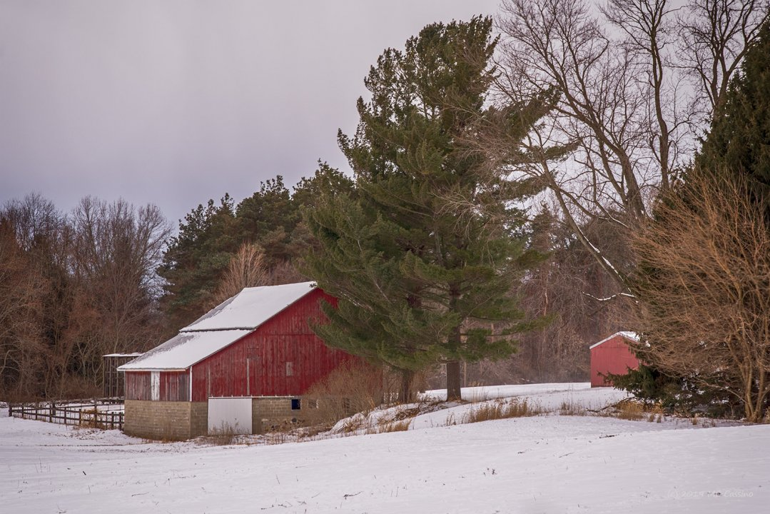 Barn and Pine Trees