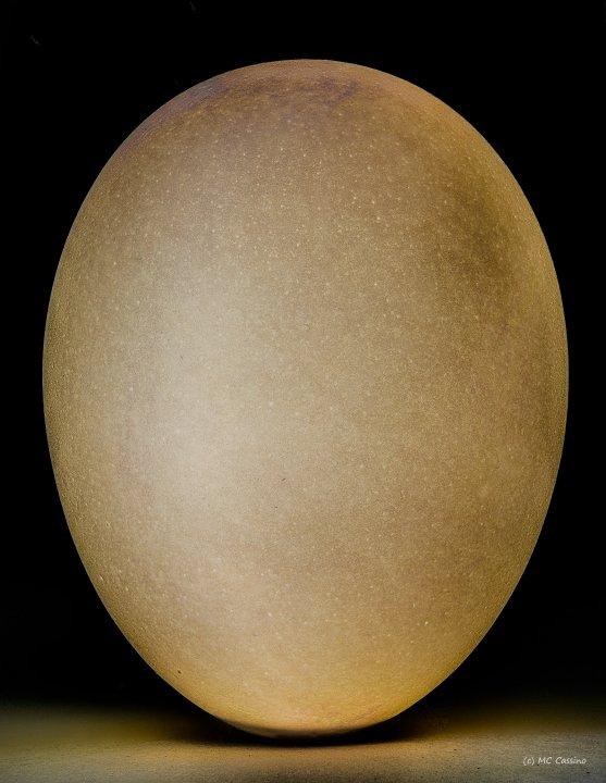 Egg Study #3