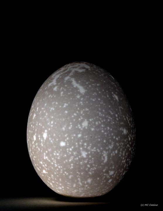 Egg Study