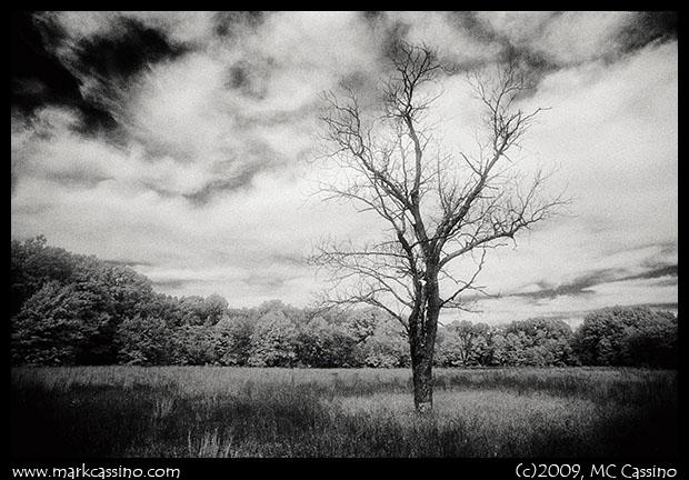IR SHot of Tree In Field