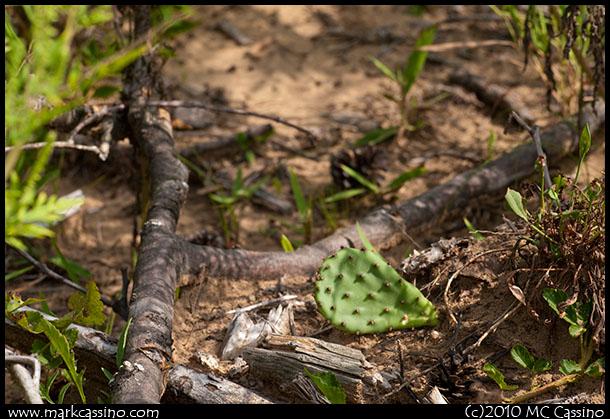 One Cactus Sprig