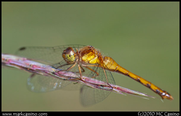 Dragonfly Photograph