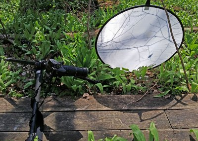 Photo setup with diffuser for wildflower close ups