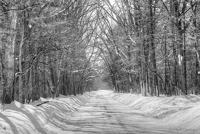 Black and white film photo of a snow covered road in the Allegan Forest