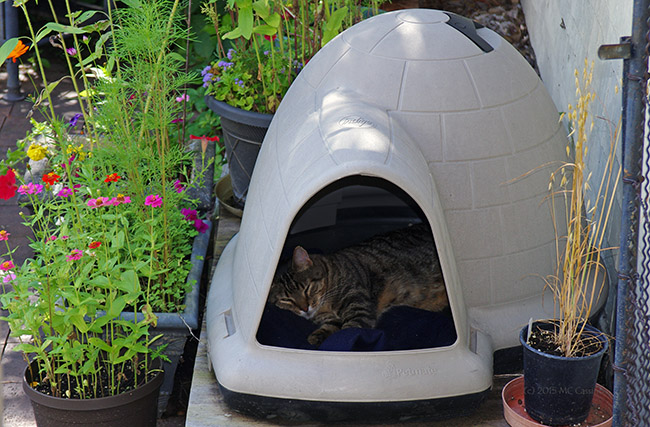 Cat Sleeping in Igloo Doghouse