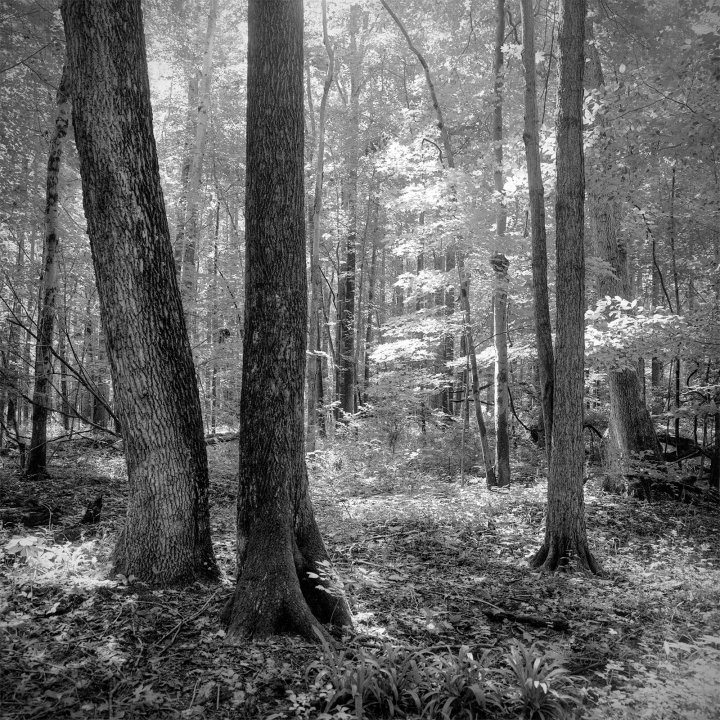 B&W Landscape Photo of Midwestern Woods