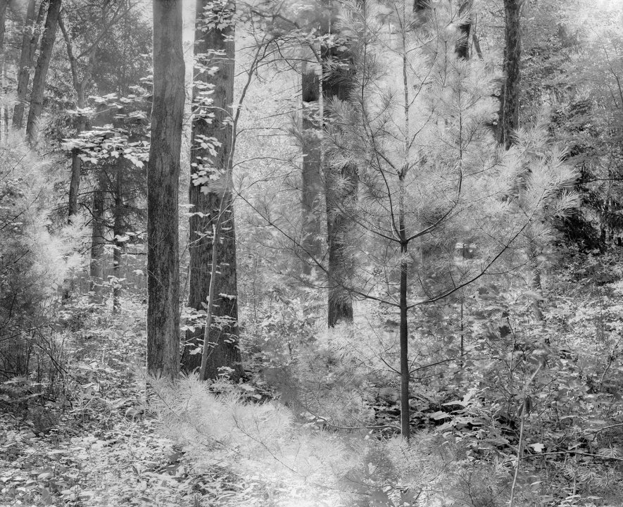 B&W Film Photo of Woods at Noon