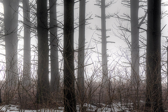 Trees on a Foggy March Morning