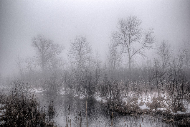 Trees and a Creek on a Foggy March Morning