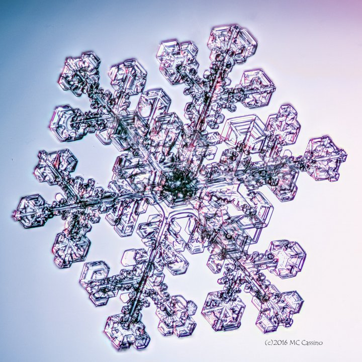 Focus Stacked Snowflake