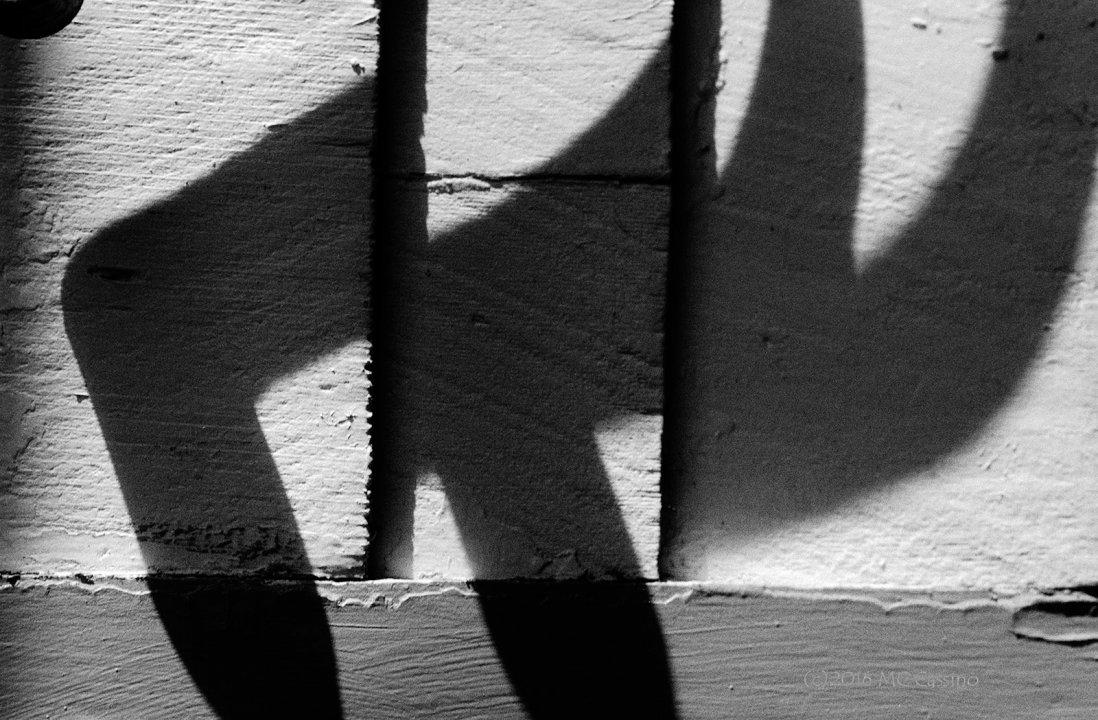 Shepard Hook Shadows