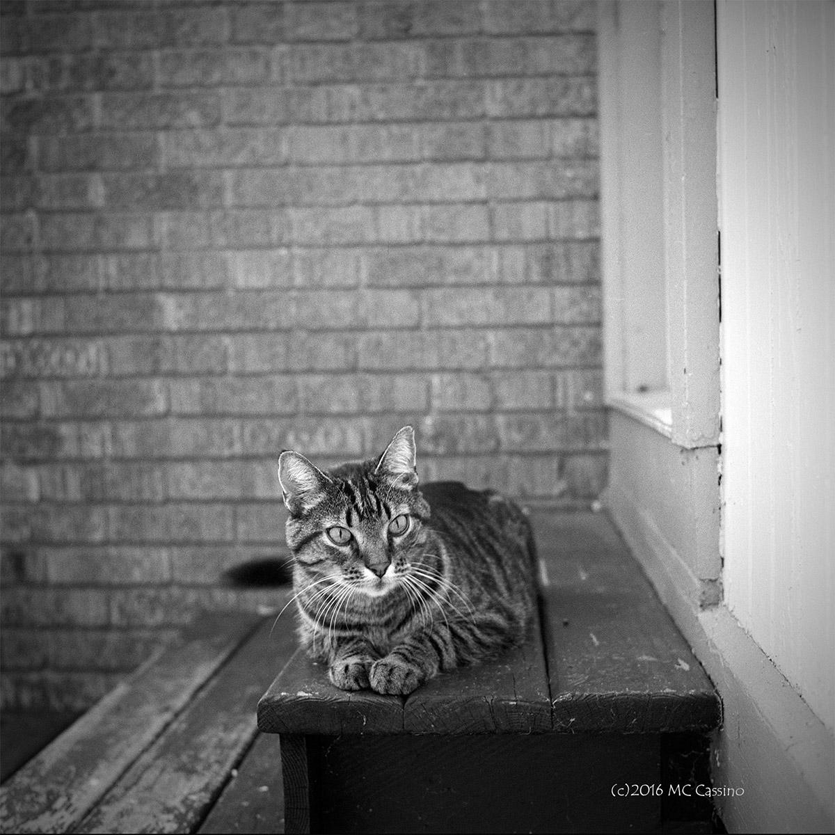anticipation b w cat photo