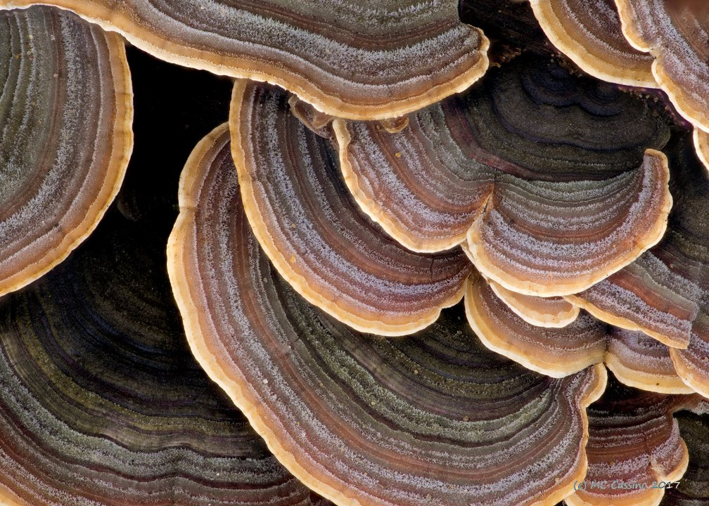 Close up photo of wood fungus