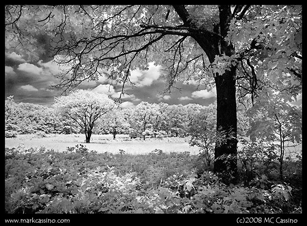Infrared Photo Taken with Rollei IR 400